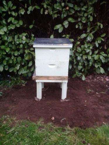 bees, kids