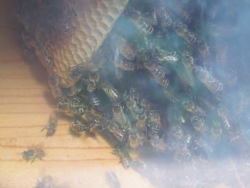 Bees, new hive, wax