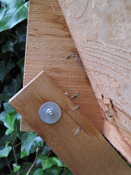 Bees, new hive, wax
