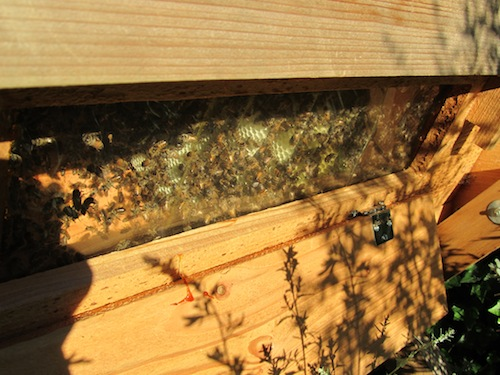 brown hive log, propolis, bees, lily pond
